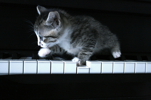pianokitty